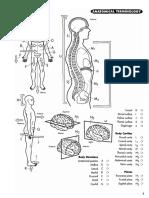 Anatomia Para Colorir