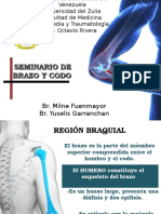 Anatomia y Semiologia de