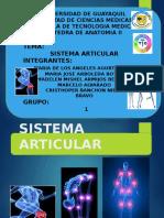 Articulaciones (Grupo 1)