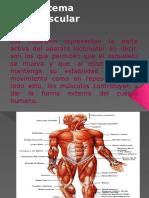 diapositivassistemamuscular-110905164727-phpapp02.pptx