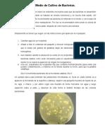 Medio de Cultivo de Bacterias