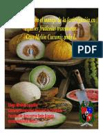 Fertirrigacion en Melones