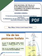 via de Las Pentosas y Metabolismo Del Glucógeno-CLAV