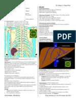 Páncreas Bazo e Hígado