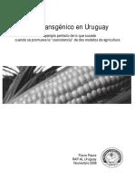 Maiz Transgenico Uruguay