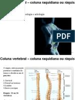 Osteologia esqueleto axial_V1.ppt