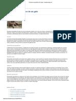 El Sistema Esquelético de Un Gato - Triplebstriping
