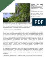 Cultivo Del Árbol Milagroso de Moringa en El Perú