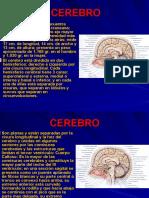 Cerebro Configuracion Interna
