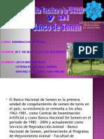 Banco de Semen 2