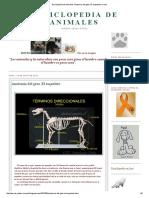 Enciclopedia de Animales_ Anatomia Del Gato