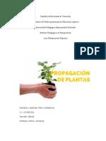 Propagacion Felix (1)