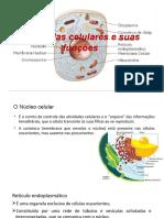 Organelas Celulares e Suas Funcoes