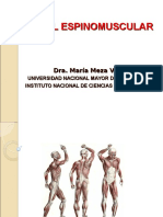 Nivel Espinomuscular