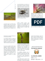 Los Insectos Poseen Un Esqueleto Externo Formado Por Quitina