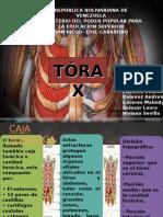 torax anatomia.odp