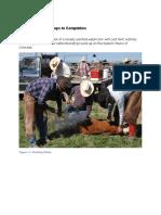 cattle branding techniqu