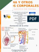 examen-basico-de-orina.pptx
