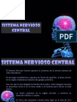 sistemanerviosocentralembriologia-150506025537-conversion-gate01.ppt