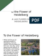 Flower of Heidelberg