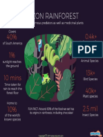 Amazon Rainforest Facts – Mocomi Kids
