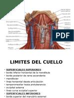 Anatomia2.5