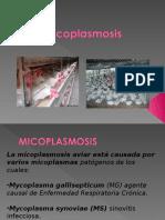 Micoplasma Aves 2011