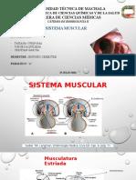 Muscularatura de Cabeza y Extremmidades