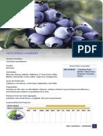 ficha tecnica arandano.pdf