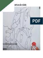 Puntos Cefalometricos PDF