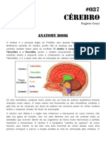 037 Anatomy Book Cérebro