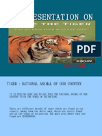 Tiger a Presentation On
