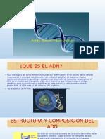 Diapositiva Adn