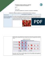 Control de calidad pulpa de fresas