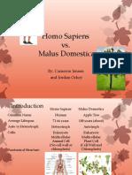 homo sapiens vs malus