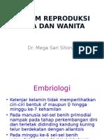 Embriologi Sistem Reproduksi Pria Dan Wanita