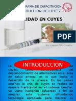 185857468-Sanidad-en-Cuyes.ppt