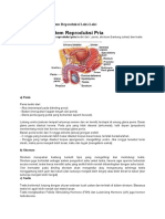 Anatomi Fisiologi Sistem Reproduksi Laki
