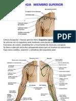 Clase 2.1 - Osteología