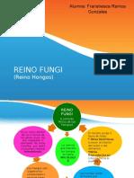 REINO FUNGI. Diapositiva