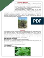 4 Plantas Medicinales, muy funcionales