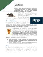 Agentes Vectores _rata, Piojo, Jejen, Murcielago