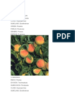 taxonomia de las plantas