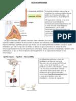 Gluco Corticoid e 1