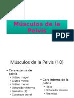 Músculos de La Pelvis