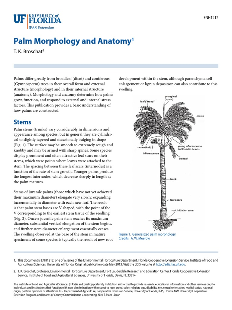 Papper de Investigacion a-priori de Las Palmeras   Root   Plant Stem