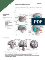 Emb - Devt of Digestive System