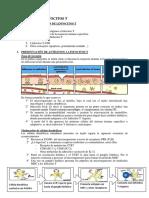 Activacion de linfocitos.pdf