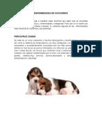 Enfermedades-de-perros-cachorros (1).docx
