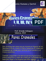 Pares Craneales 2013